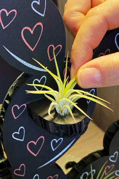 Kactus Puzzle 3D Love Tillandsia