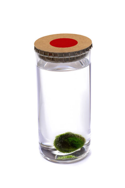 Alga Palla™ Eco - Akan Avana