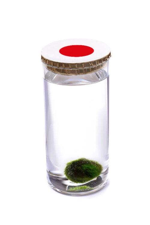 Alga Palla™ Eco - Akan Bianco