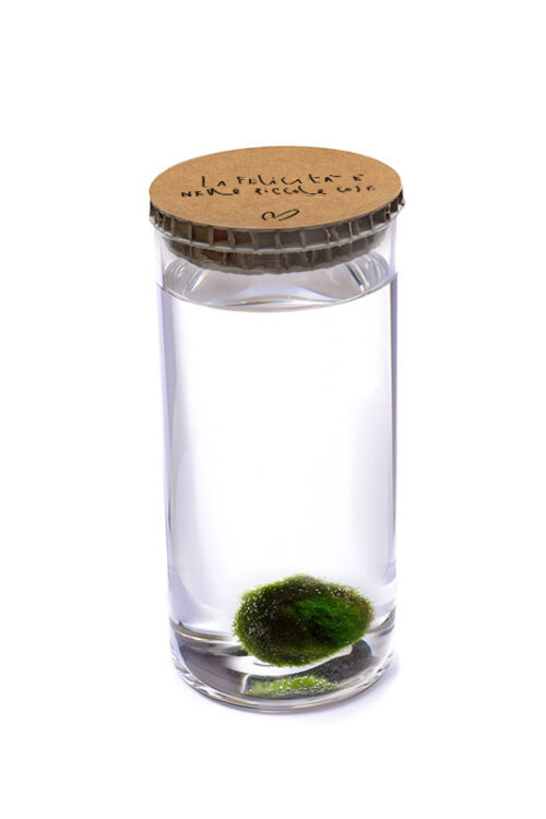 Alga Palla™ Eco - La Felicità Black Avana