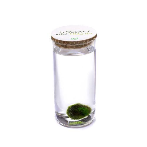 Alga Palla™ Eco - La Felicità Green Bianco