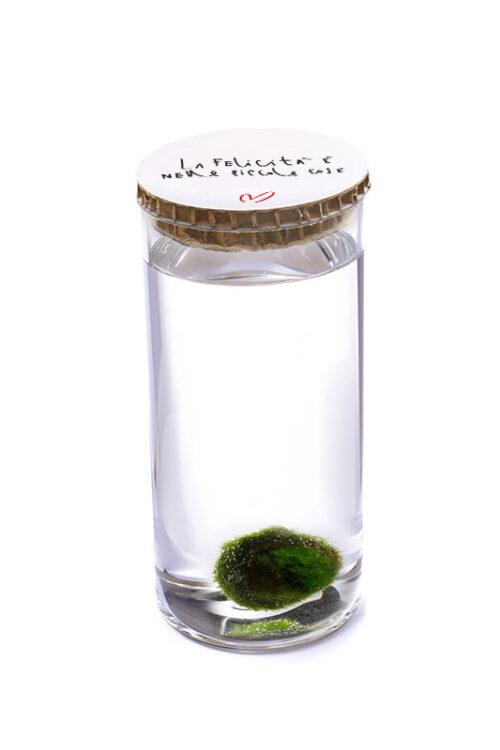 Alga Palla™ Eco - La Felicità Red Bianco