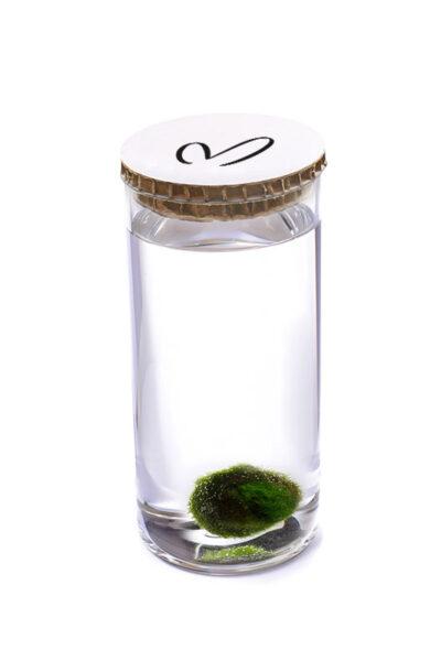 Alga Palla™ Eco - Malerba Bianco