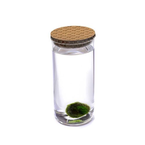 Alga Palla™ Eco - Texture Avana