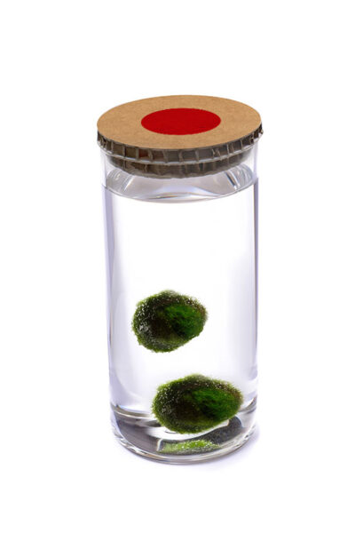 Alga Palla™ Eco Coppia - Akan Avana