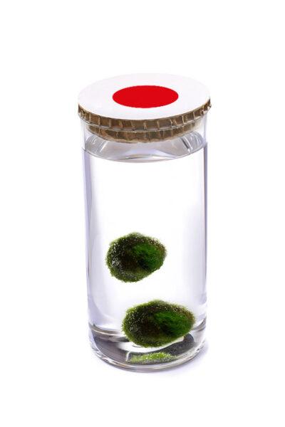 Alga Palla™ Eco Coppia - Akan Bianco