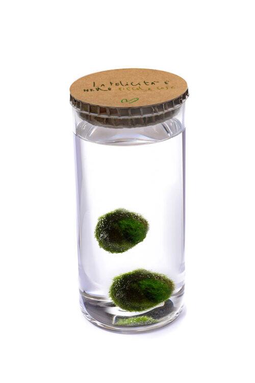 Alga Palla™ Eco Coppia - La Felicità Green Avana