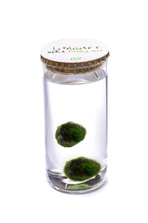 Alga Palla™ Eco Coppia - La Felicità Green Bianco