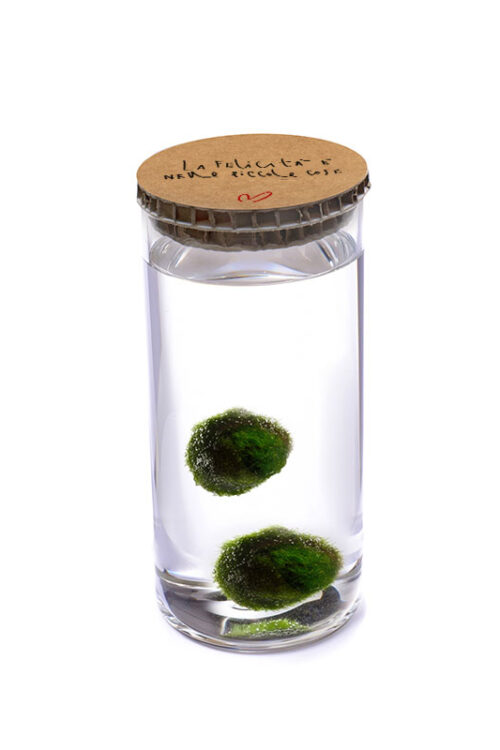 Alga Palla™ Eco Coppia - La Felicità Red Avana