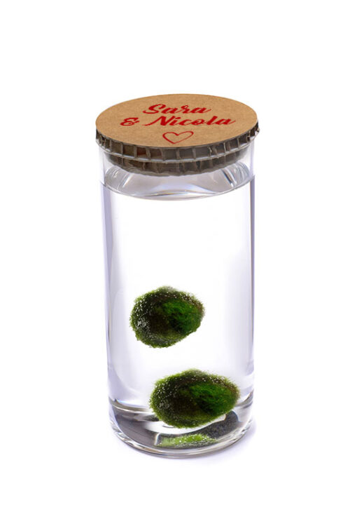 Alga Palla™ Eco Coppia - Love Avana