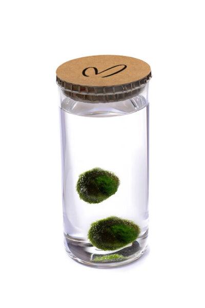 Alga Palla™ Eco Coppia - Malerba Avana