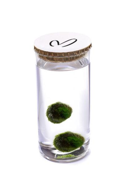 Alga Palla™ Eco Coppia - Malerba Bianco