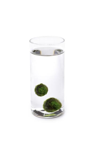 Alga Palla™ Zen - Coppia
