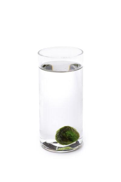 Alga Palla™ Zen